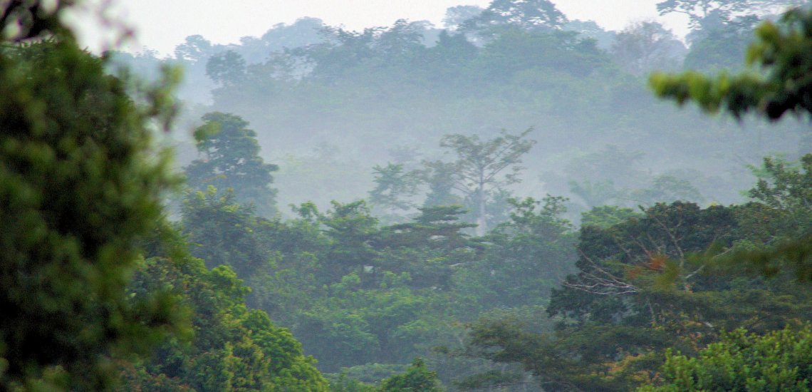 going-green-in-west-africas-forests